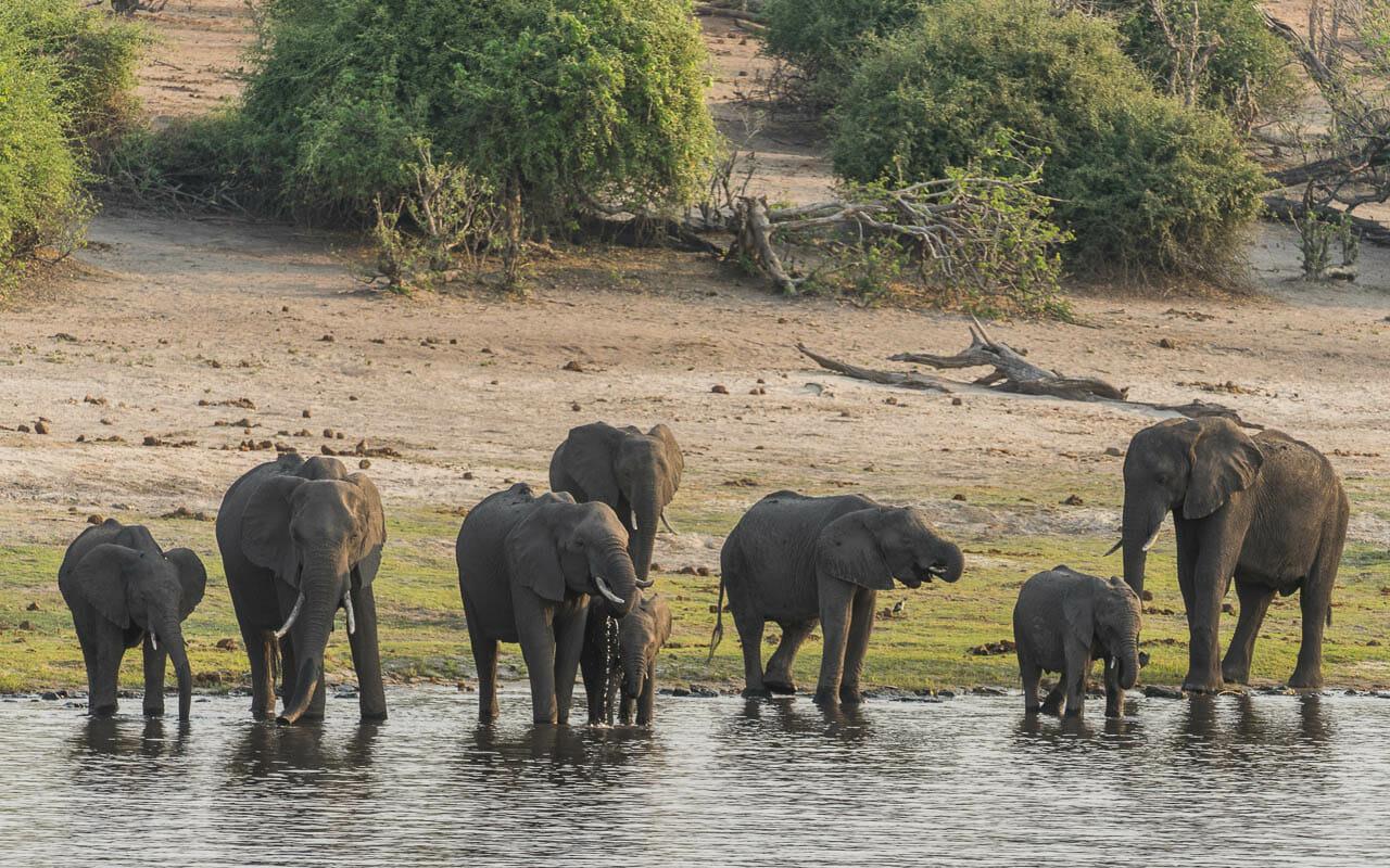 Botswana Reisetipps Chobe Nationalpark Elefanten