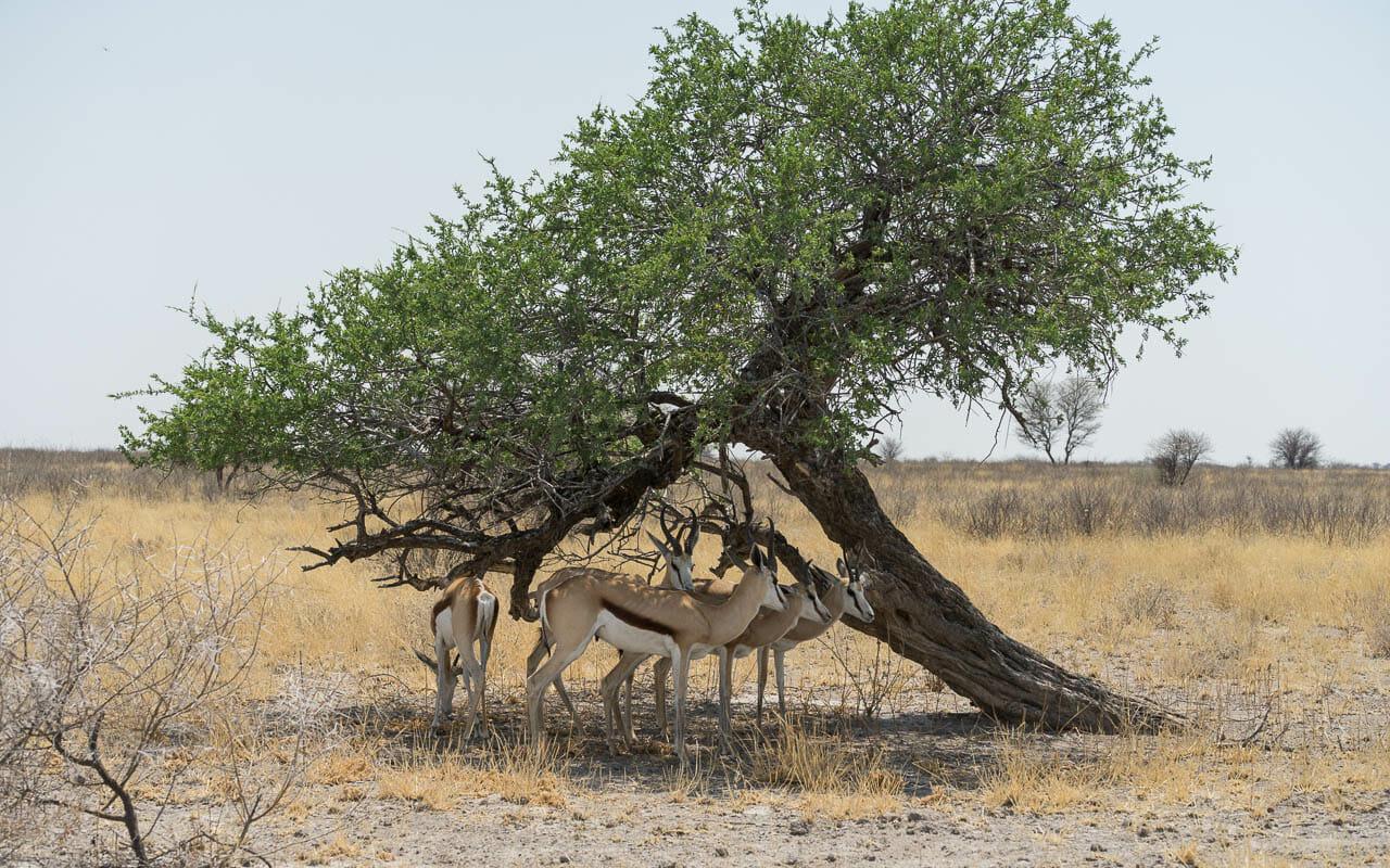 Botswana Reisetipps CKGR Deception Valley