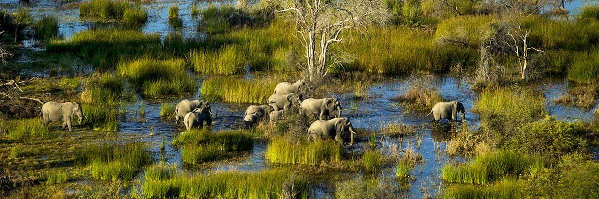Botswana Reisetipps – alles was du wissen musst!