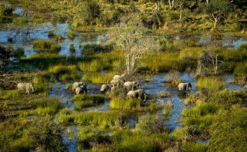 Botswana Reisetipps Okavango Delta Elefantenherde