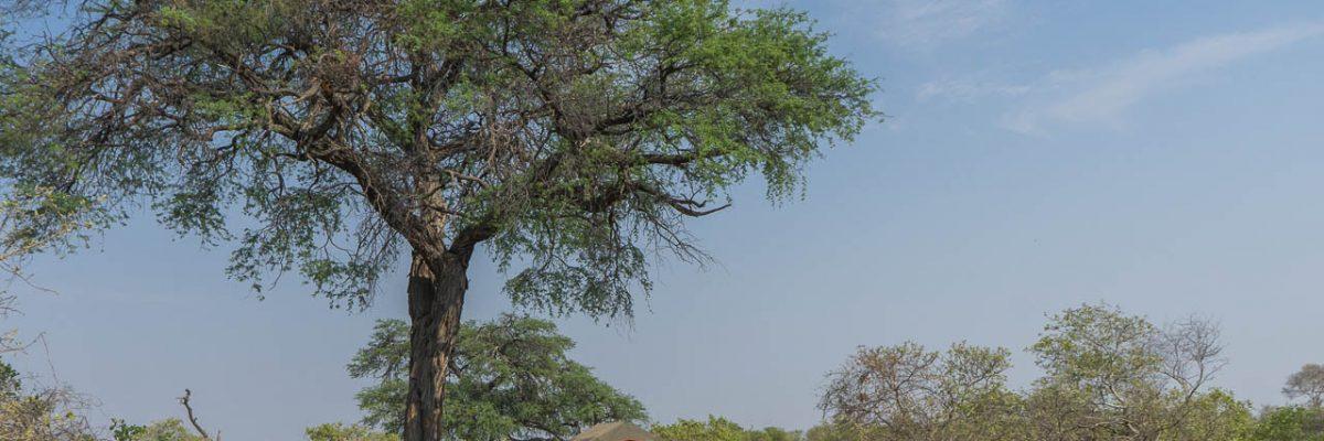 Autofahren in Botswana