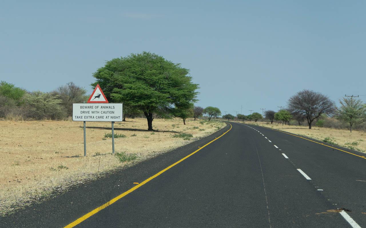 Autofahren Botswana Tipps Achtung Tiere