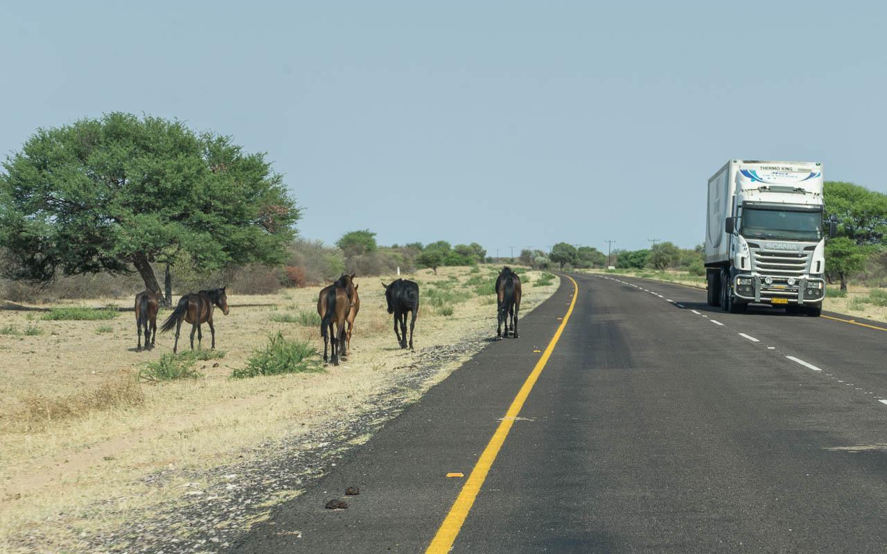Autofahren Botswana Tipps Linksverkehr und Tiere