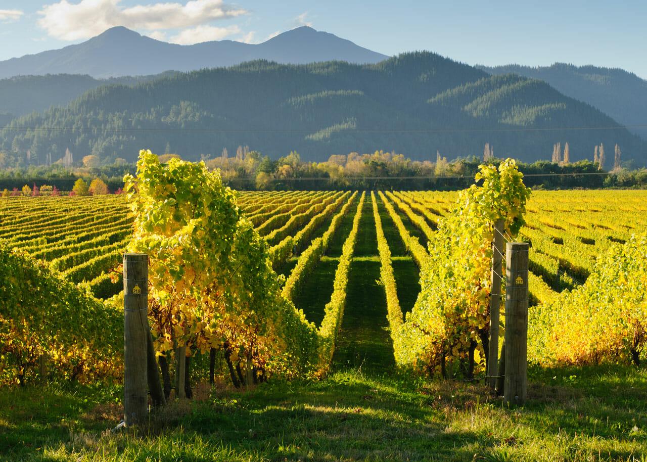 Neuseeland Tipps: Weinanbeugebiet um Marlborough