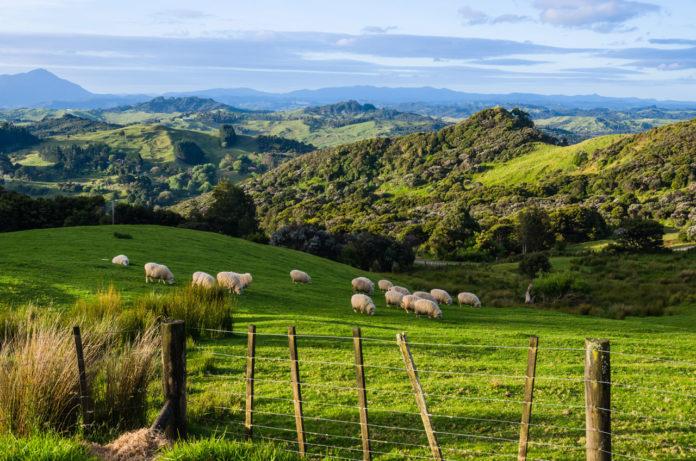 Neuseeland TIpps - Reise planen