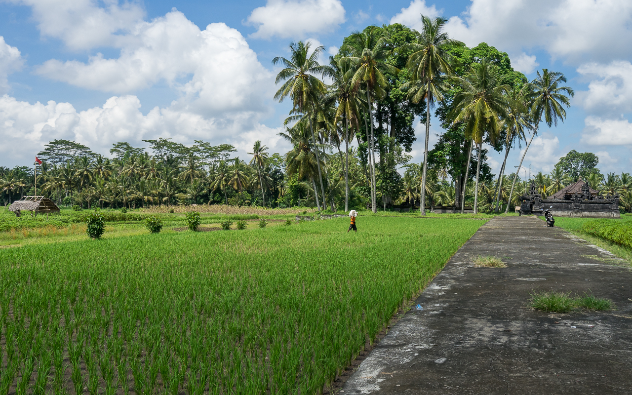 besten-ausfluege-ubud-reisfelder-mengwi-tipp