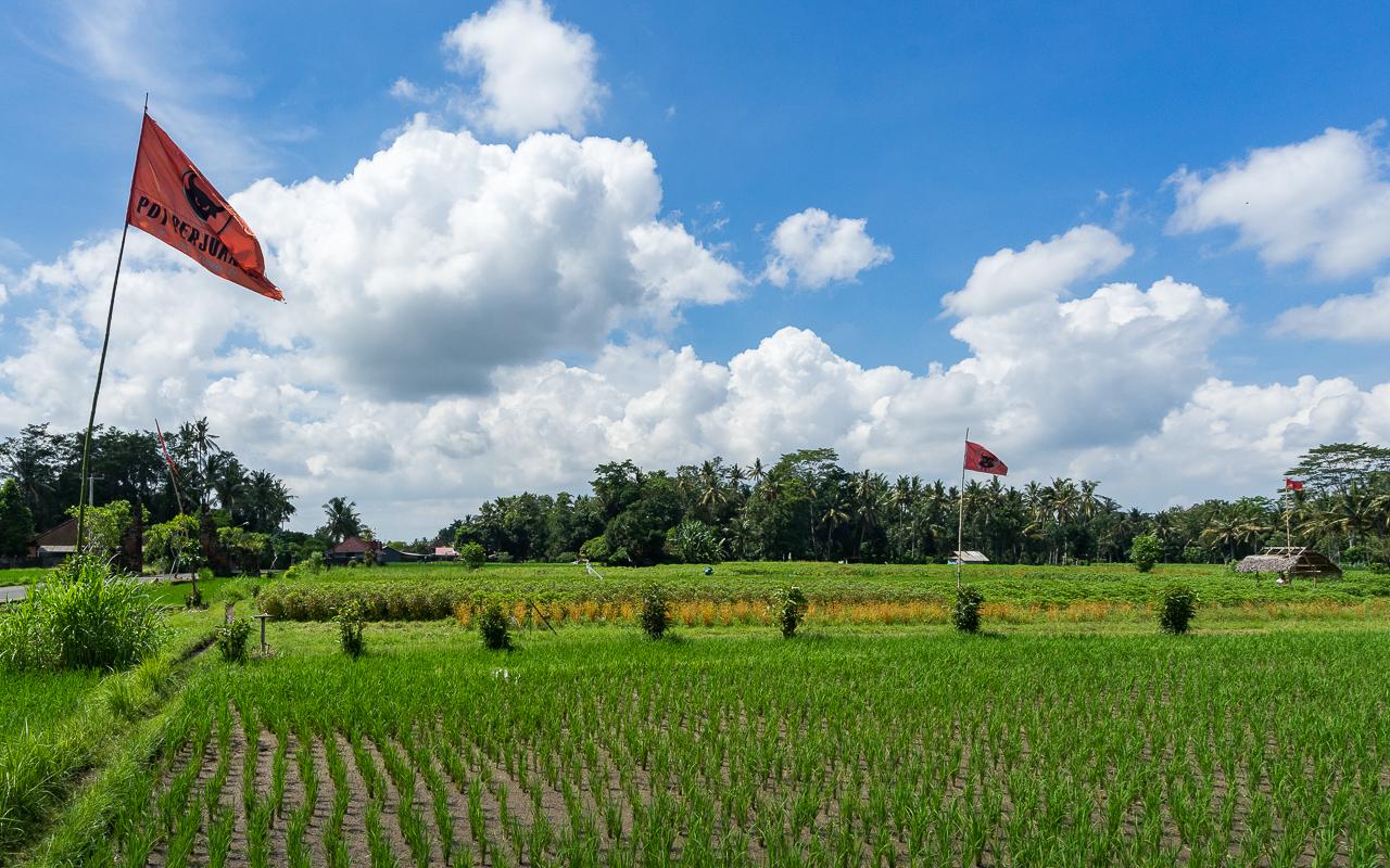 Beste Ausflüge um Ubud Reisfelder Mengwi