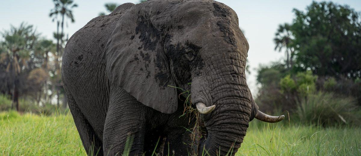 Namibia & Botswana: Von Elefanten, exklusiven Safaris & Nächten im Dachzelt