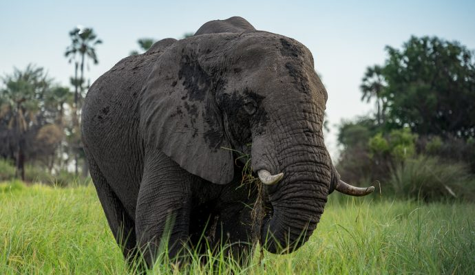 Safari packliste & ausrüstung für afrika game drives & bush walks