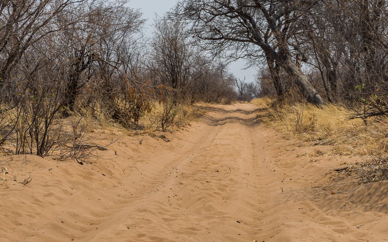 botswana-reisebericht-savuti-fahrt