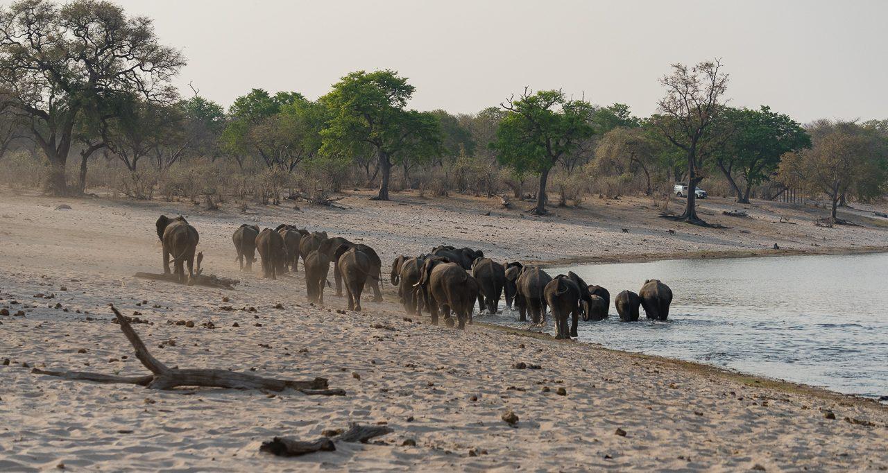 Caprivi Namibia Bwabata-nationalpark-gamedrive-elefanten