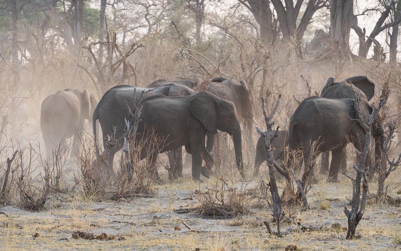 caprivi-namibia-bwabata-nationalpark-gamedrive-elefanten-staub-2