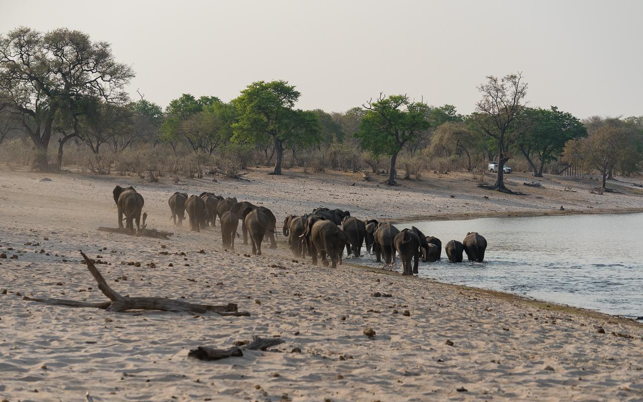 caprivi-namibia-bwabata-nationalpark-gamedrive-elefanten