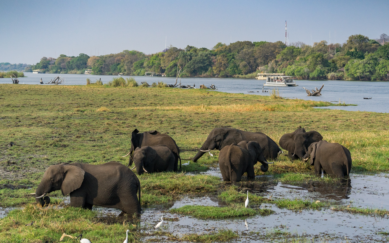 chobe-river-front-boot-cruise-elefanten-3