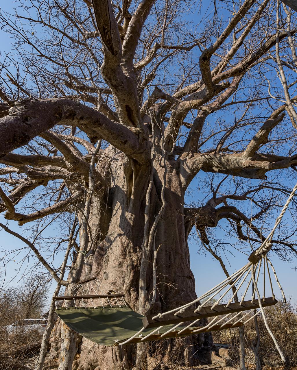 gweta-planet-baobab-zimmer-haengematte-2