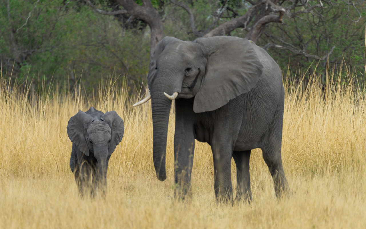 okavango-delta-elefanten-familie-botswana