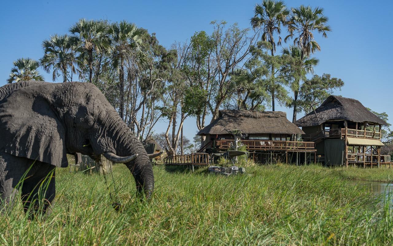 okavango-delta-gunns-camp-elefant-3