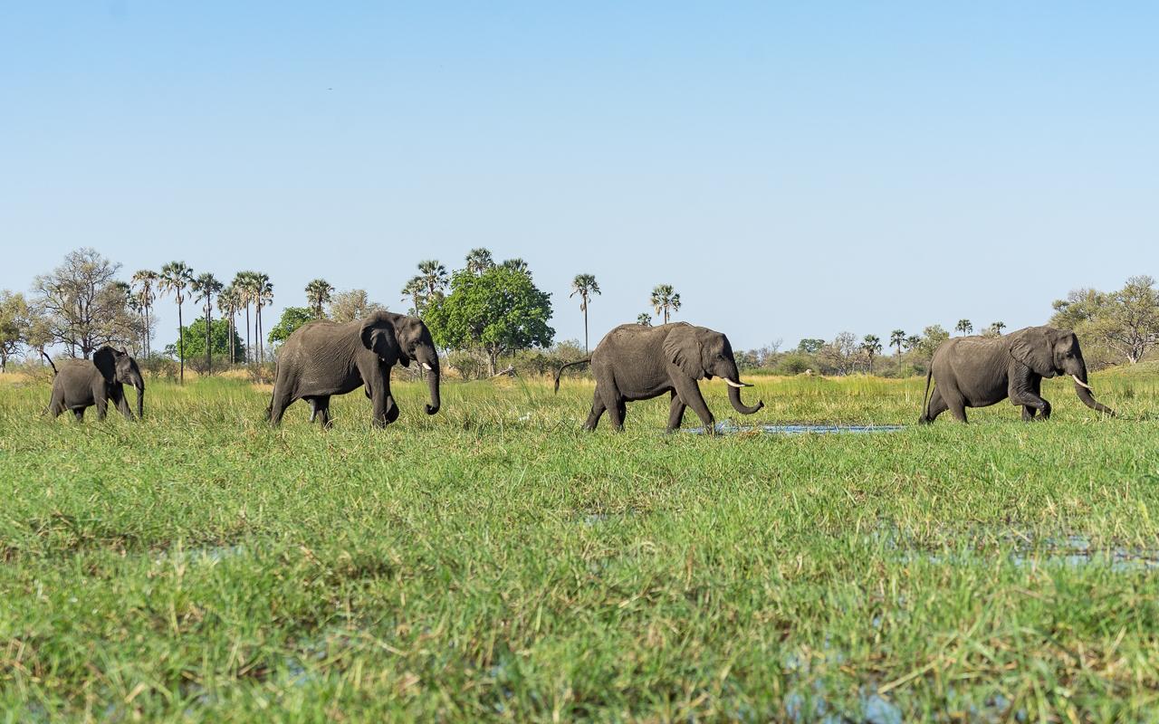 okavango-delta-landschaft-elefanten