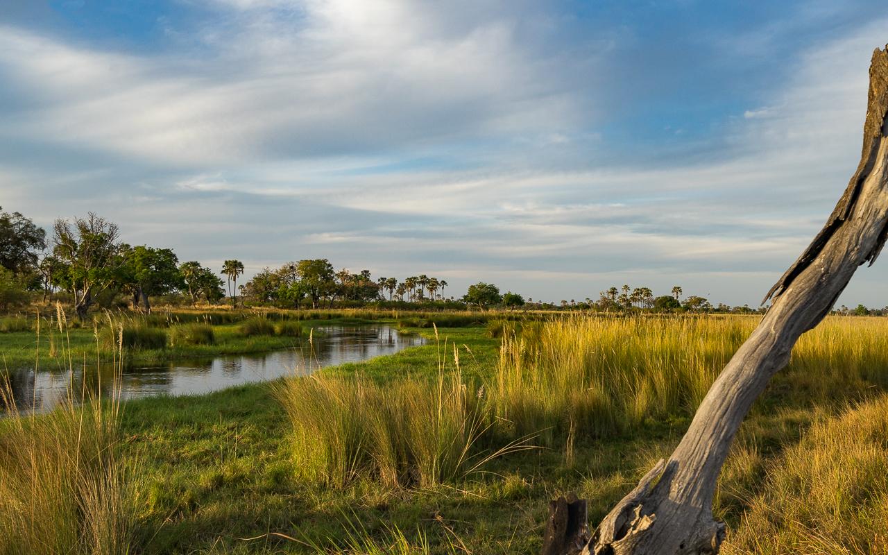 Wunderschönes Okavango Delta!