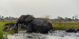 Beste Reisezeit Botswana Okavango Delta