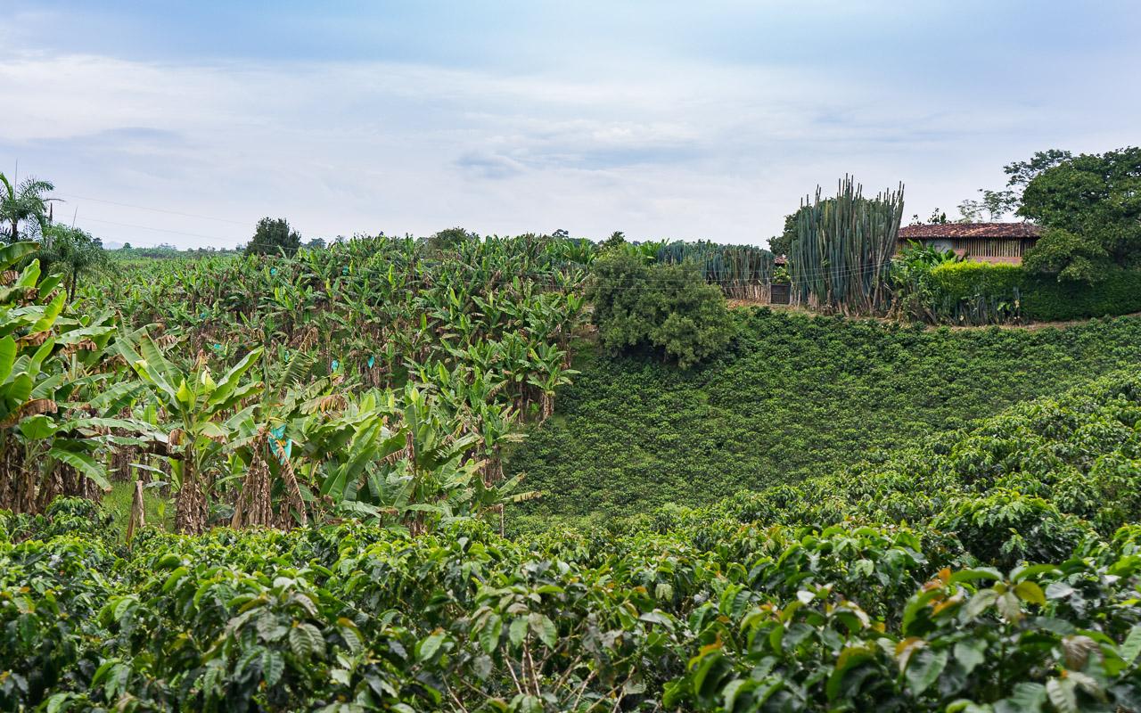 kolumbien-reisebericht-quimbaya-kaffeezone