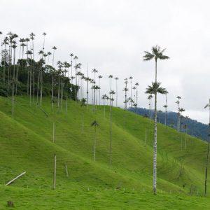 kolumbien-reisebericht-valle-de-cocora-2