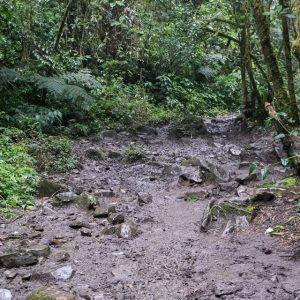 kolumbien-reisebericht-valle-de-cocora-matsch