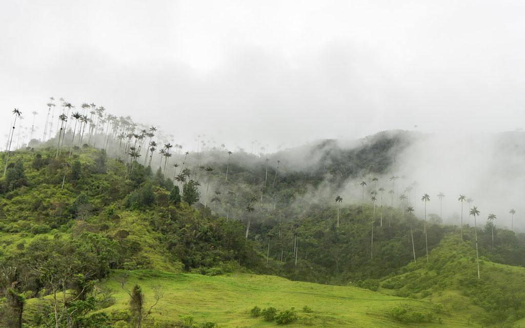 kolumbien-reisebericht-valle-de-cocora-nebel