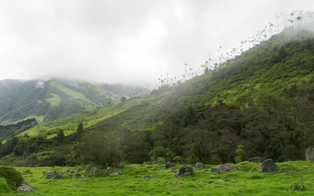 kolumbien-reisebericht-valle-de-cocora-palmen