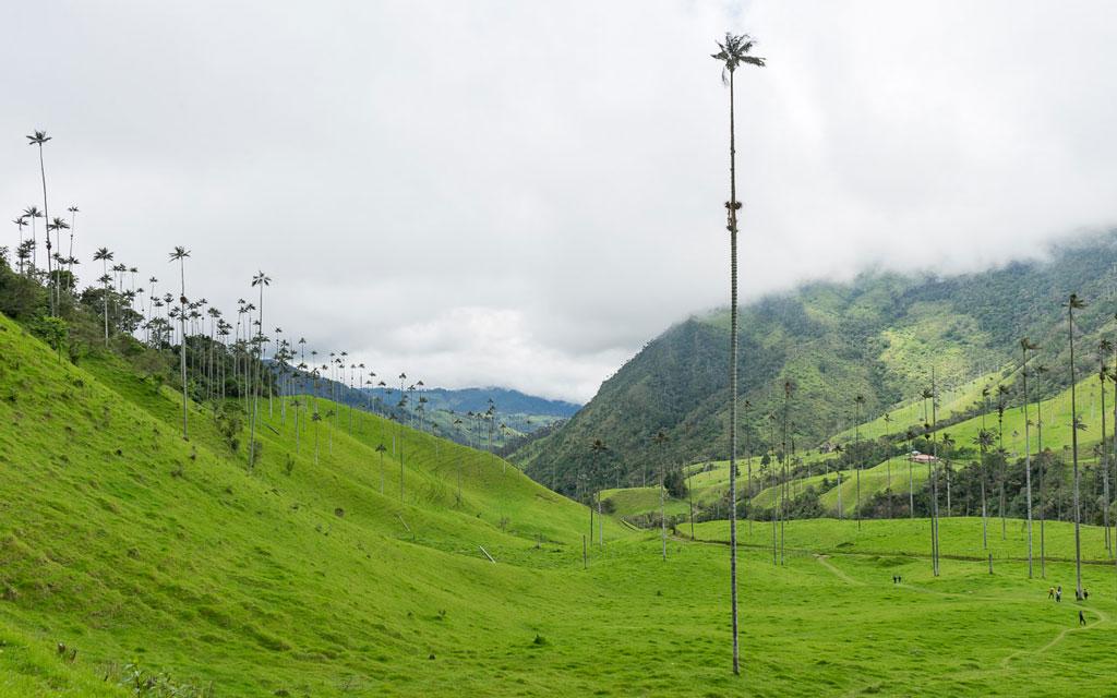 kolumbien-reisebericht-valle-de-cocora-wachspalmen