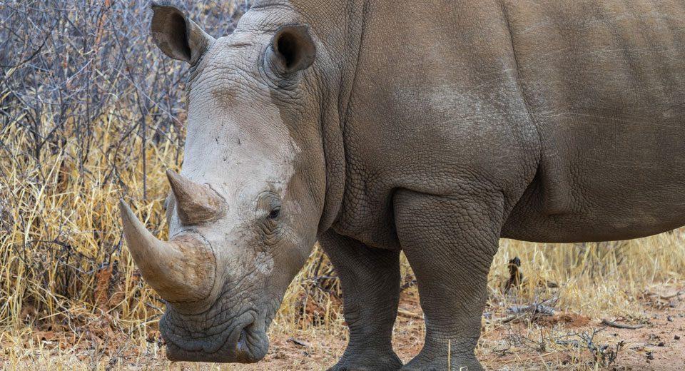Waterberg Wilderness: Face to face mit Nashörnern beim Rhino Drive