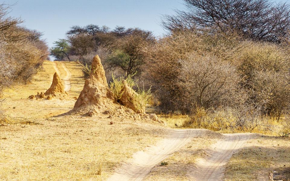 Piste auf dem Weg zum Rhino Drive der Waterberg Wilderness Lodge
