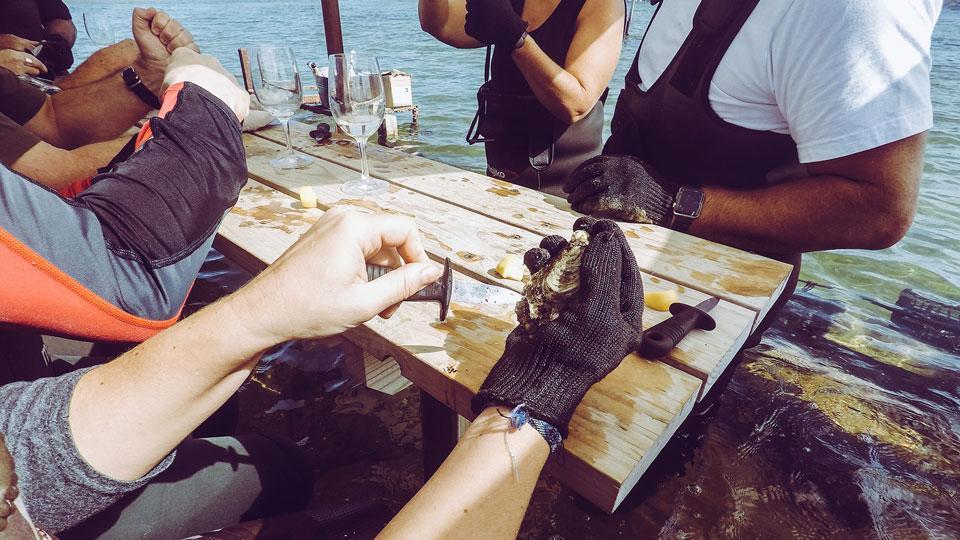 Austern öffnen Coffin Bay