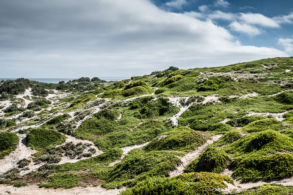 Seal Bay Kangaroo Island Natur traumhaft