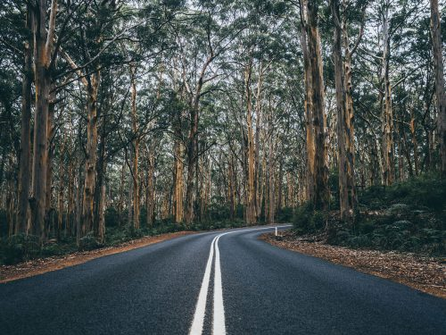 Boranup Forest Cave Road