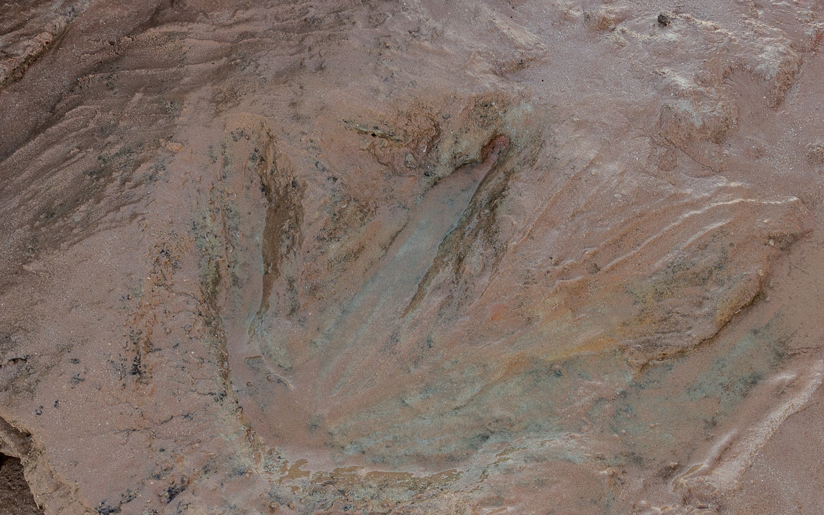Redell Beach Dinosaurier Spuren Broome