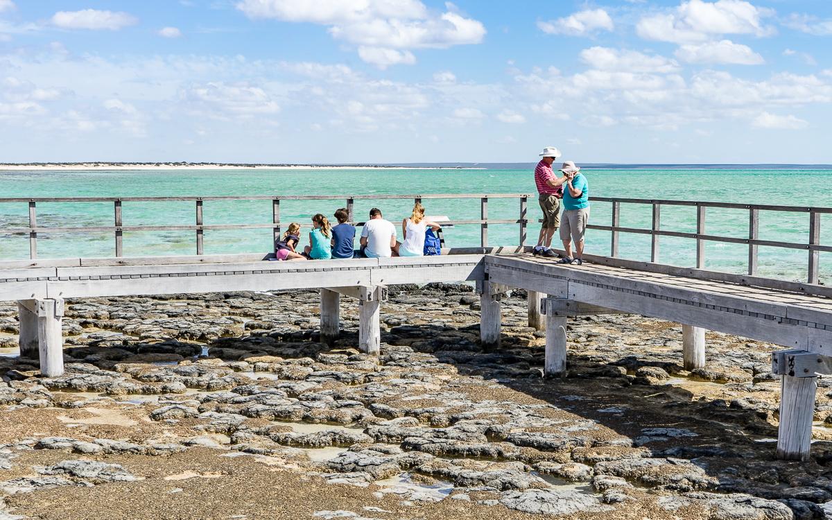 Hamelin Pool Stromatolithen Westküste Australien