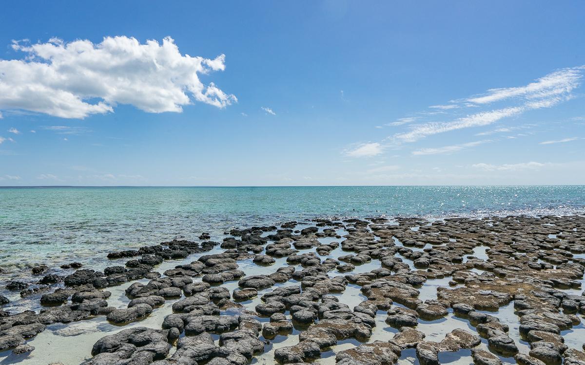 Stromatolithen Hamelin Bay Westküste Australien Highlights