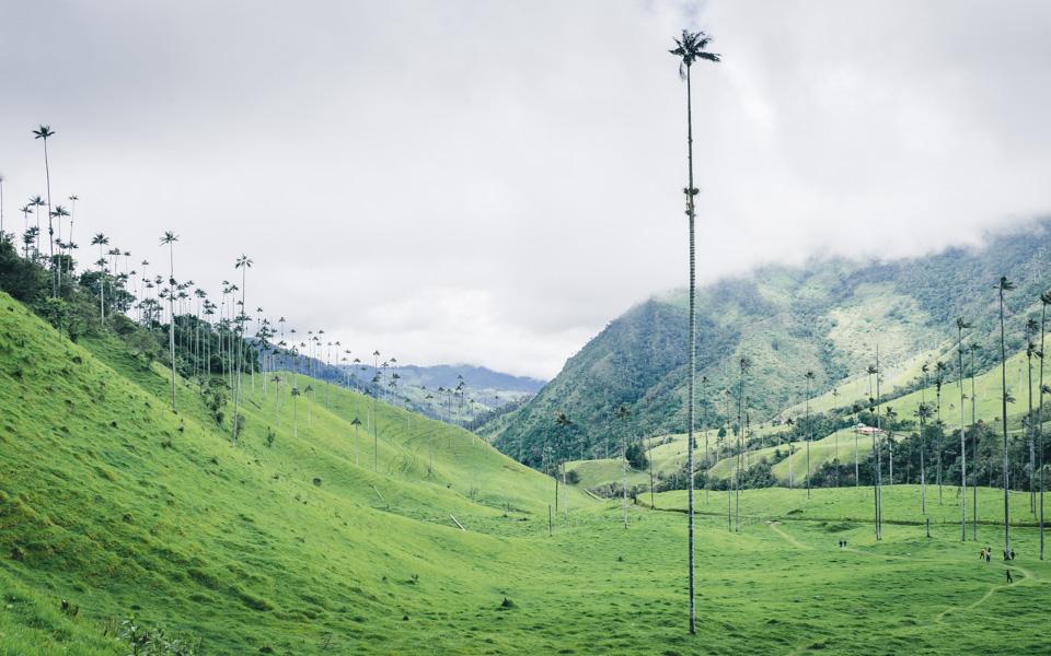 Kolumbien Reisetipps Valle de Cocora