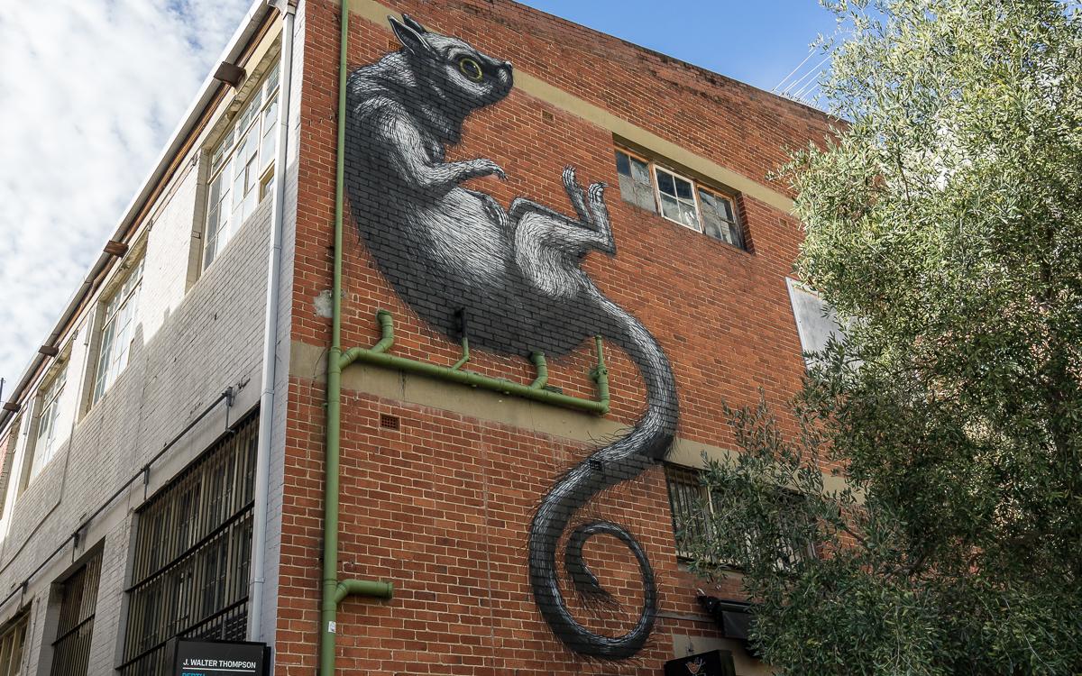 Street Art ROA Perth Northbridge