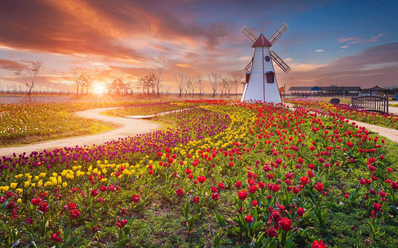 Reisetipps Urlaub April Niederlande zur Tulpenzeit
