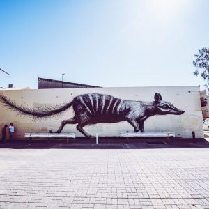 Fremantle ROA Street Art