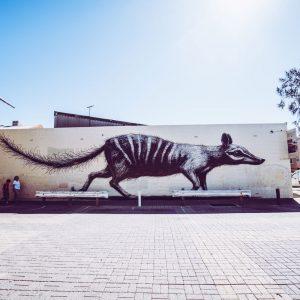Fremantle ROA Street Art