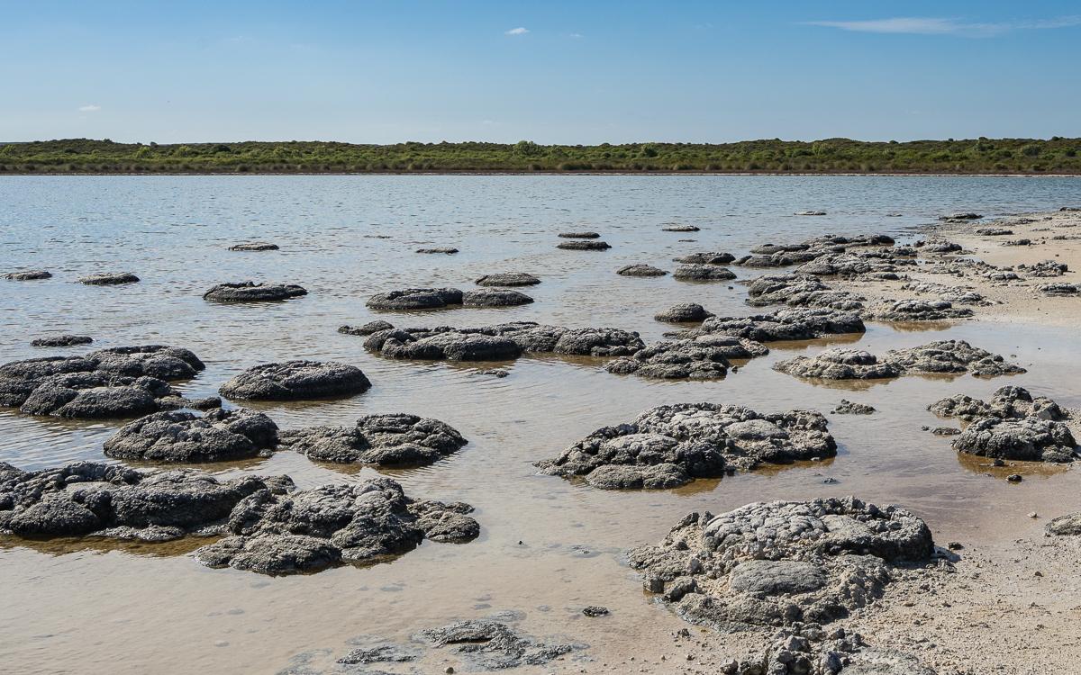 Stromatolithen, Lake Thetis, Cervantes (Western Australia)