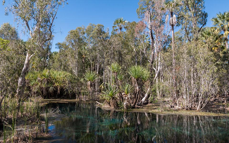 Bitte Ssprings Elsey Nationalpark Australien