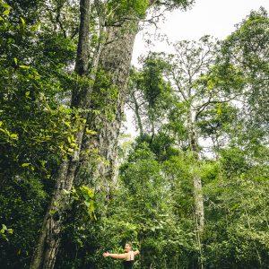 Big Tree Tsitsikamma NP Südafrika