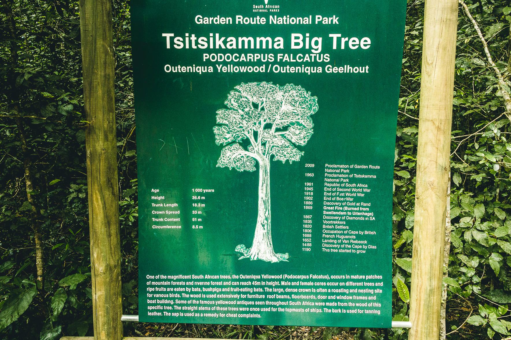 Information zum Big Tree | Tsitsikamma Nationalpark