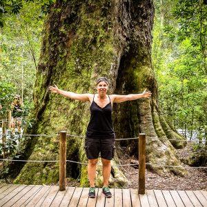 Big Tree Tsitsikamma Nationalpark