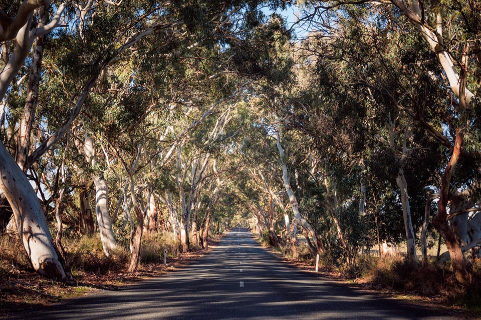Straßen im Barossa Valley Südaustralien