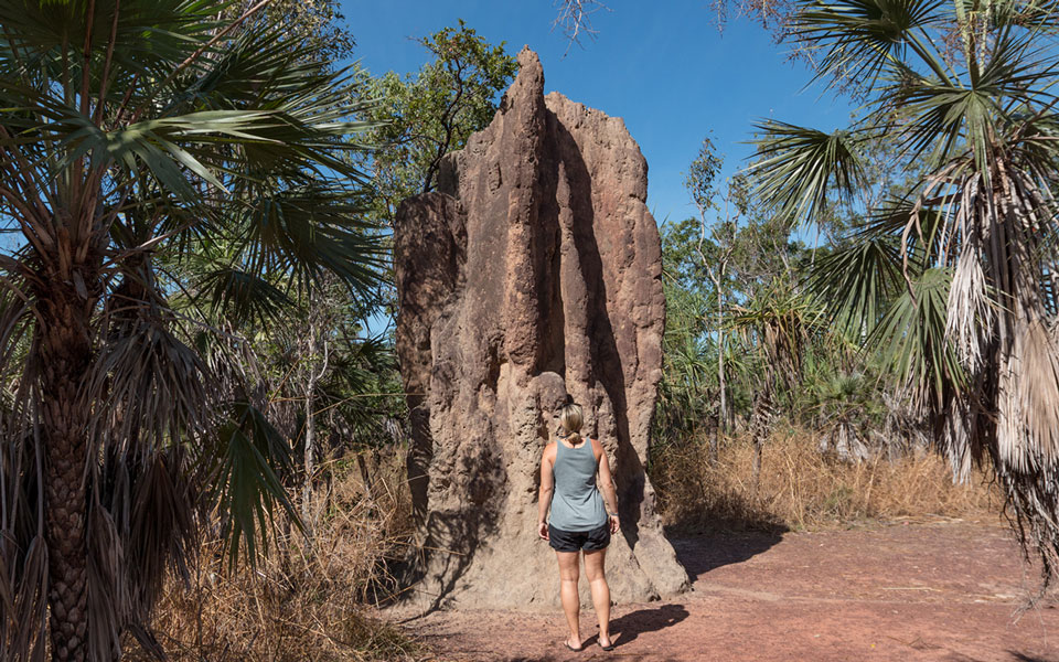 Cathedral Termite Mounds Litchfield NP